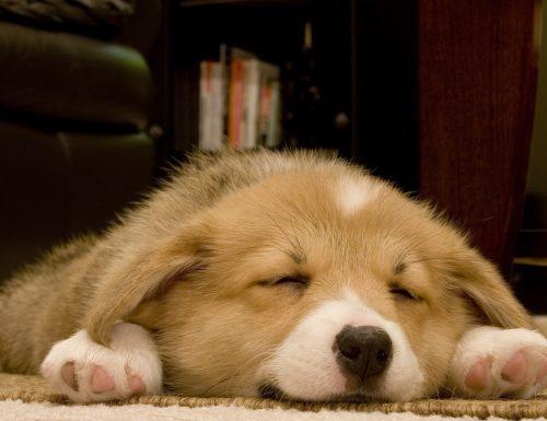 Come dormire bene ogni notte
