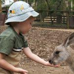 Favola il primo canguro