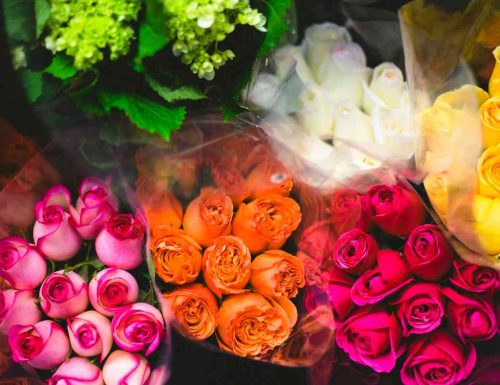 Cosa significa sognare rose