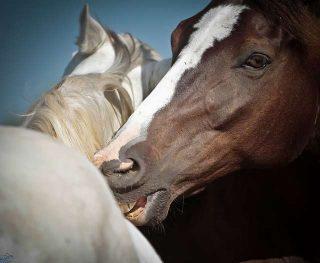 Significato sognare cavallo