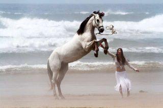 Cavalli nei sogni