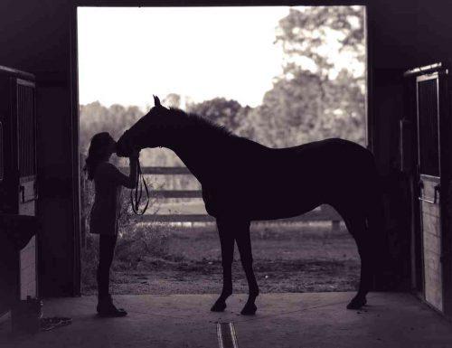Cosa significa sognare un cavallo