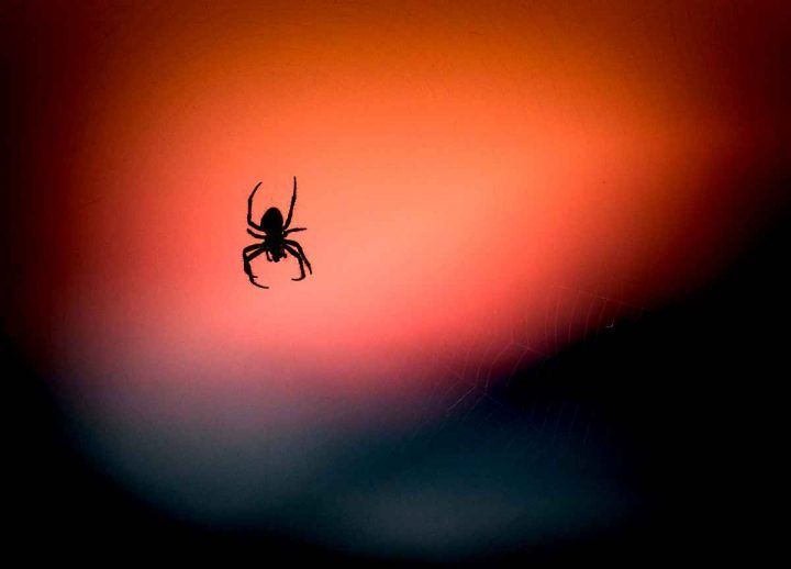 cosa significa sognare un ragno