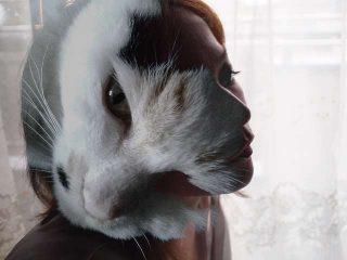 Interpretazione sogno gatto