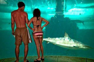 Cosa significa sognare uno squalo