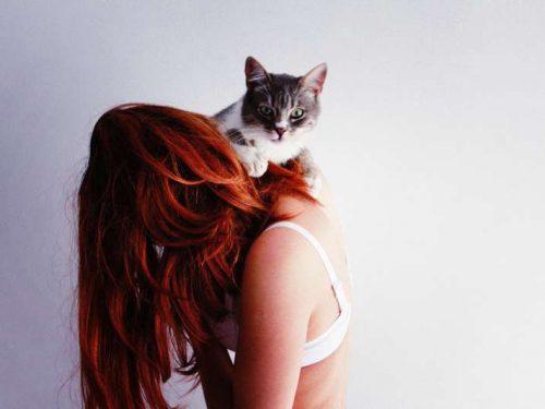 Cosa significa sognare un gatto
