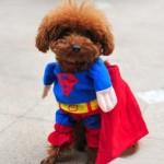 Cuccioli buffi e supereroi