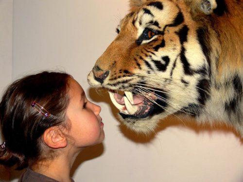 Cosa significa sognare una tigre