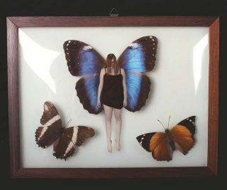 Interpretazione sogno farfalla
