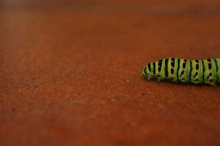 Interpretazione sogno vermi, lombrichi, bruchi, larve