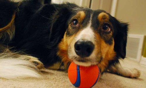 Cosa significa sognare di giocare a pallone