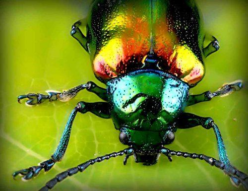 Cosa significa sognare un insetto