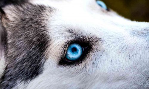 Cosa significa sognare un cane