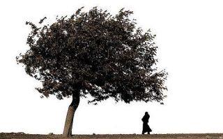 Cosa significa sognare un albero