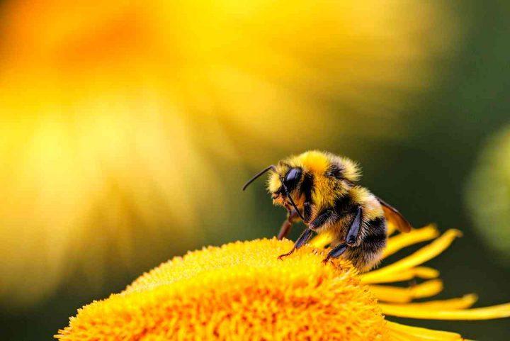 cosa significa sognare api
