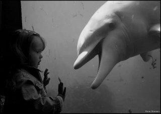 Cosa significa sognare un delfino