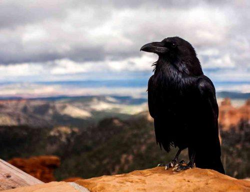 Cosa significa sognare corvi
