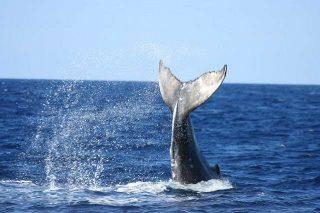 Cosa significa sognare una balena