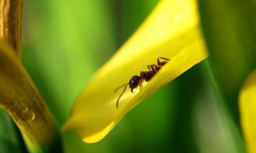 Cosa significa sognare formiche