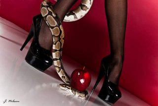 Sogno serpenti