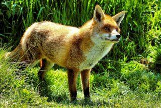 Fiabe brevi Le tre verità della volpe
