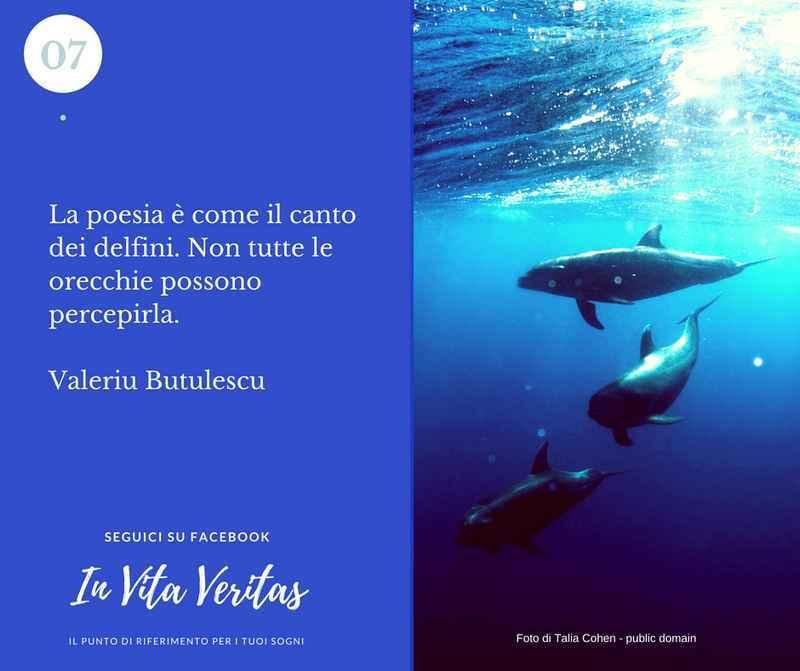 Cosa significa sognare un delfino delfini