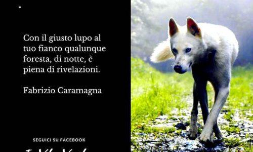 Cosa significa sognare un lupo