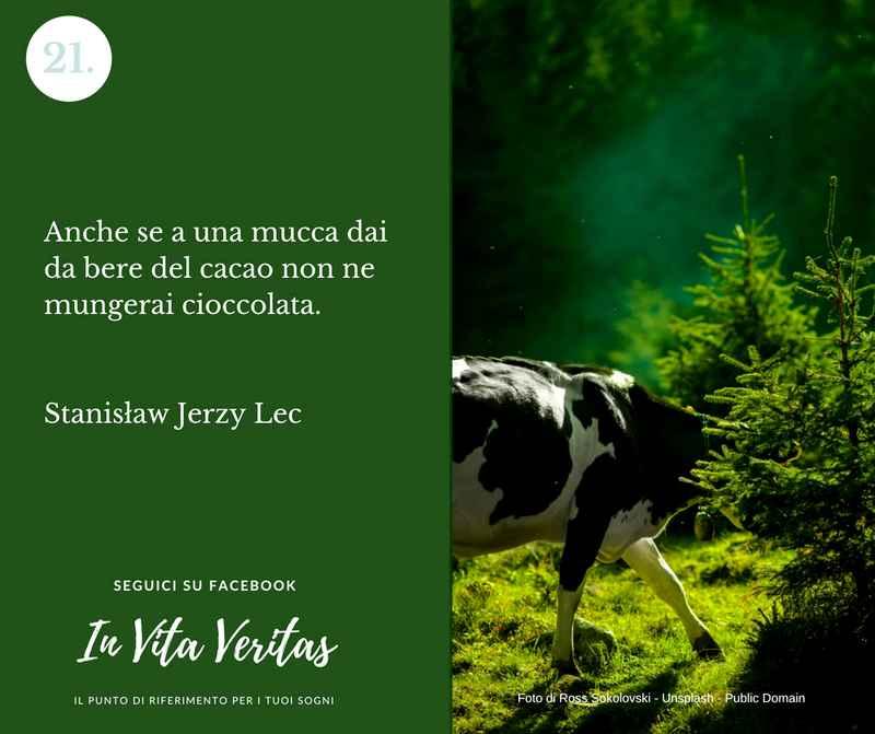 Cosa significa sognare una mucca mucche