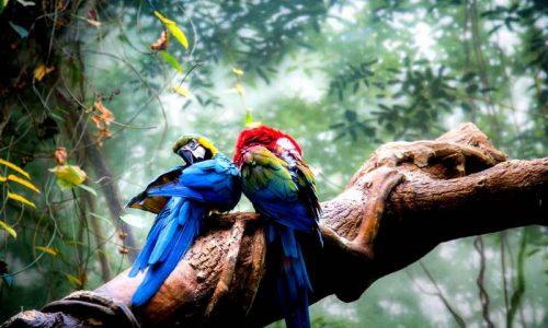 Libro dei sogni uccelli nei sogni