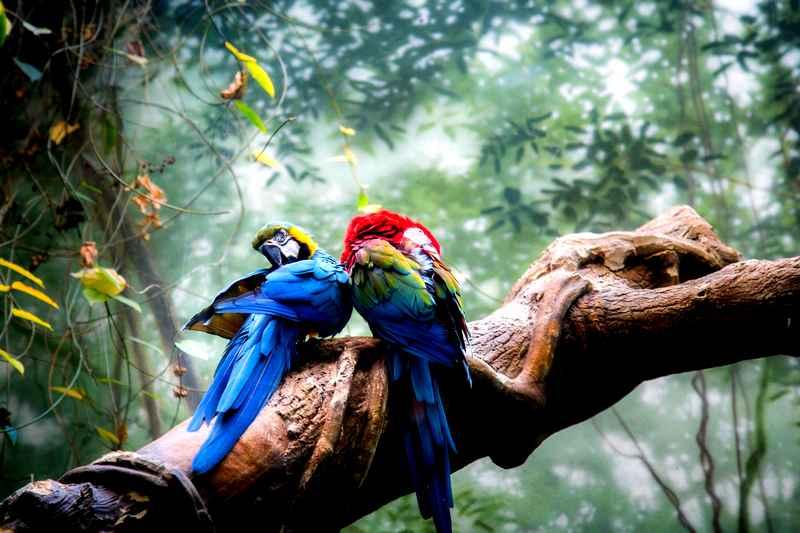 Sognare uccelli libro sogni