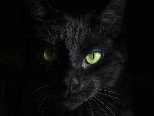 Sognare gatto nero