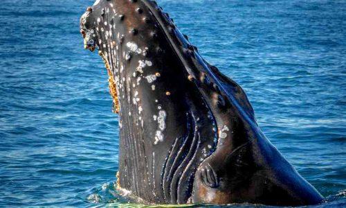 Sognare balena significato