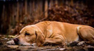 Sognare cane morto