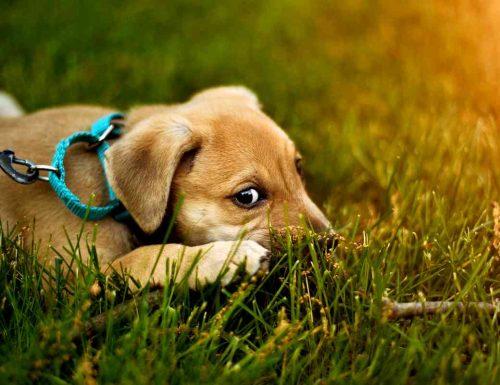 Sognare il proprio cane