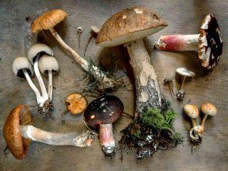 Cosa significa sognare funghi