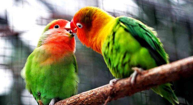 Cosa significa sognare uccelli