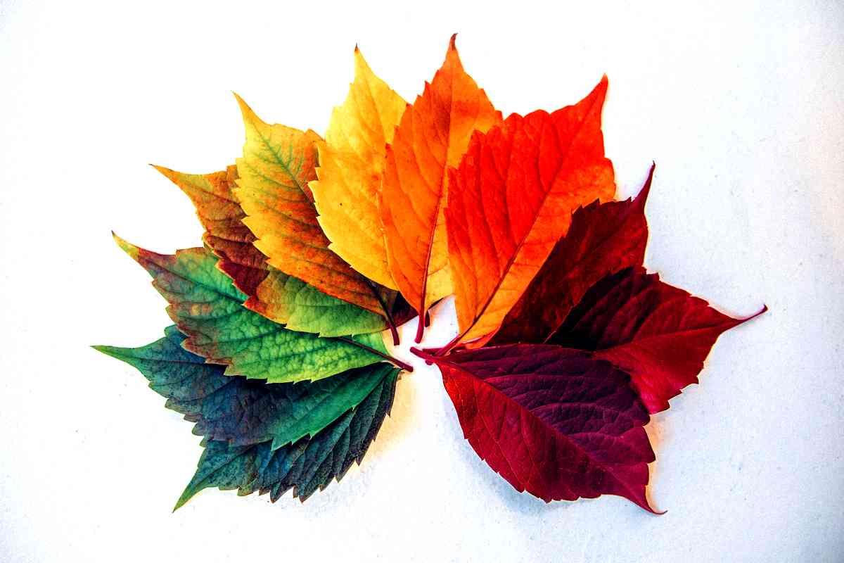 Pianta Foglie Rosse E Verdi cosa significa sognare foglie | in vita veritas