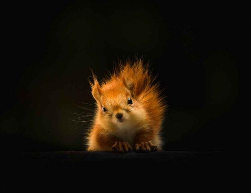 Sognare scoiattolo